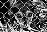 animal-welfare-1116213_960_720[1]