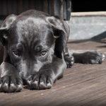 Doporučení pro chovatele zvířat v letním období