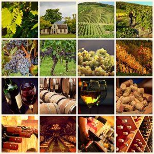 wine-1597376_640
