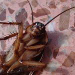 Boj s invazí domácích škůdců, švábů a štěnic